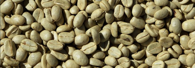 green-coffee_800x281