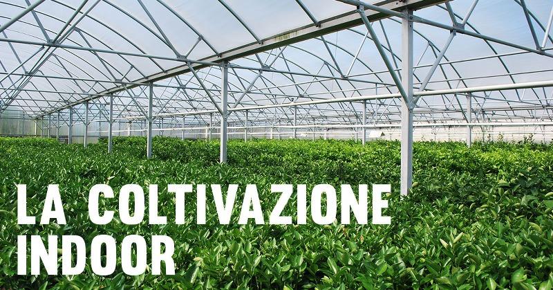 coltivazione_indoor_800x419