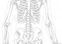 Dolori intercostali lato sinistro sotto il seno